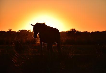 Wildes Pferd im Abendrot