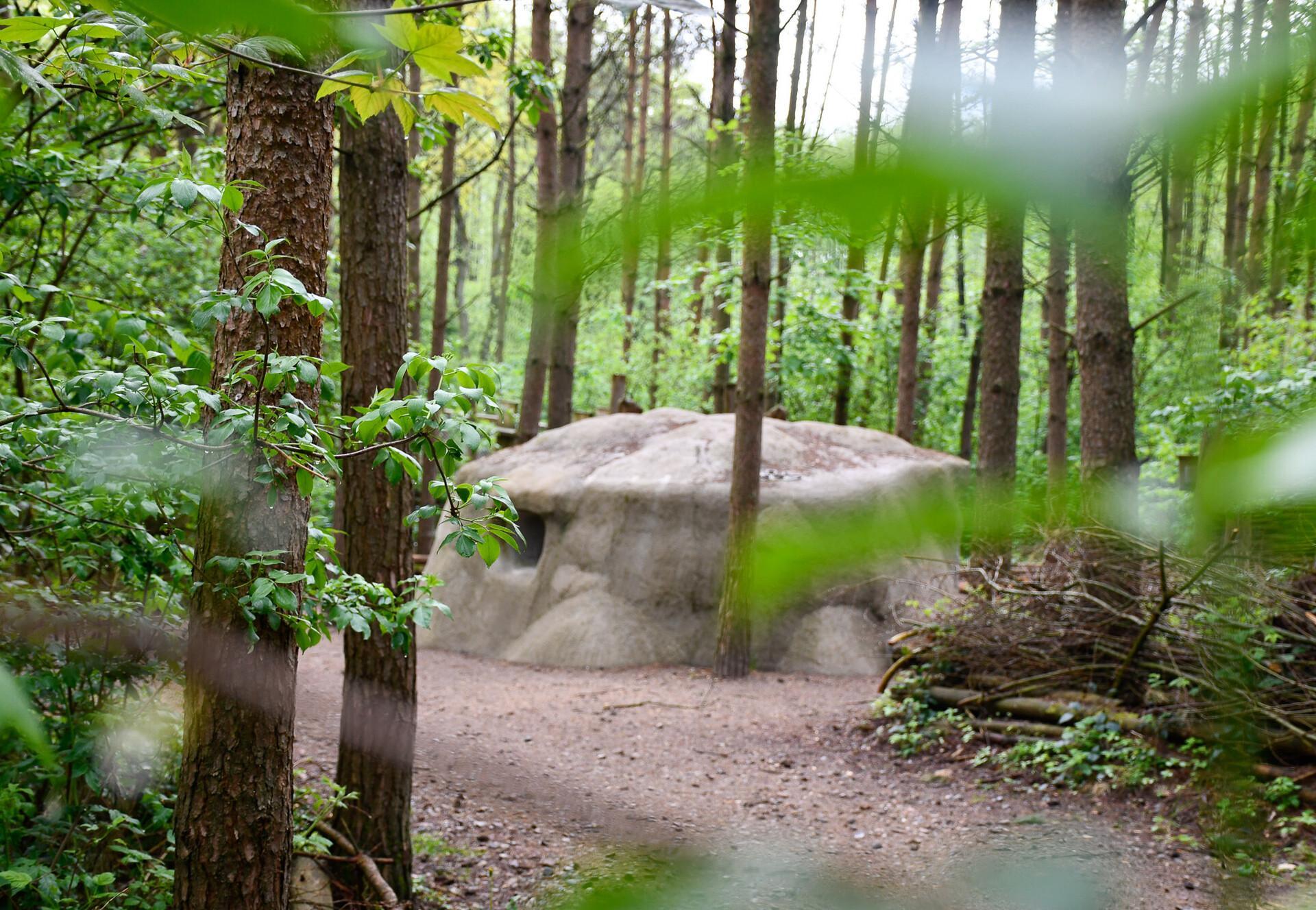 Waldwege im BÄRENWALD