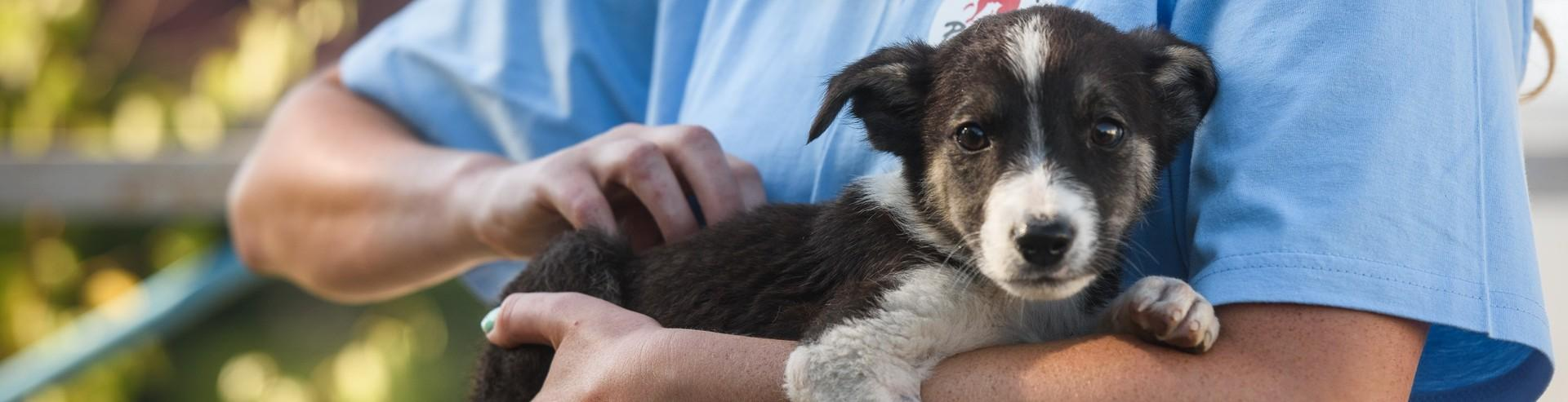 Streunerhund auf dem Arm von VIER PFOTEN Mitarbeiterin