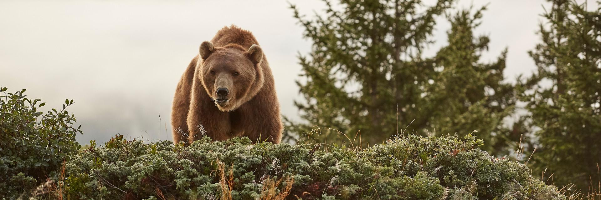 Bear Napa at a sanctuary