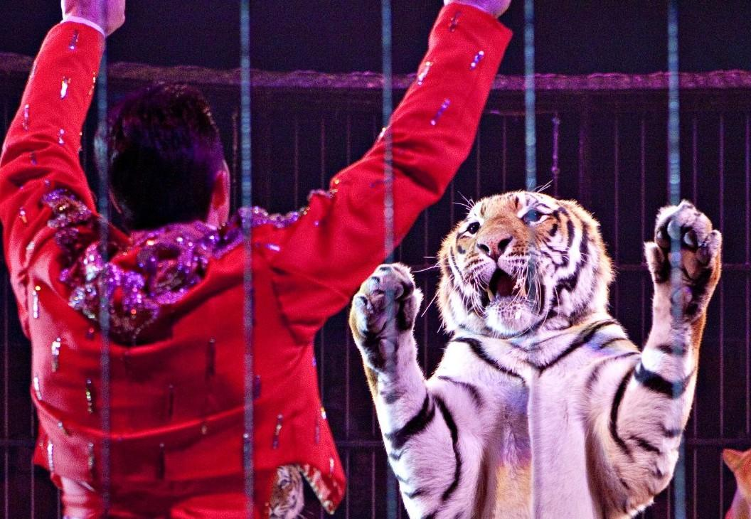 tamer and tiger