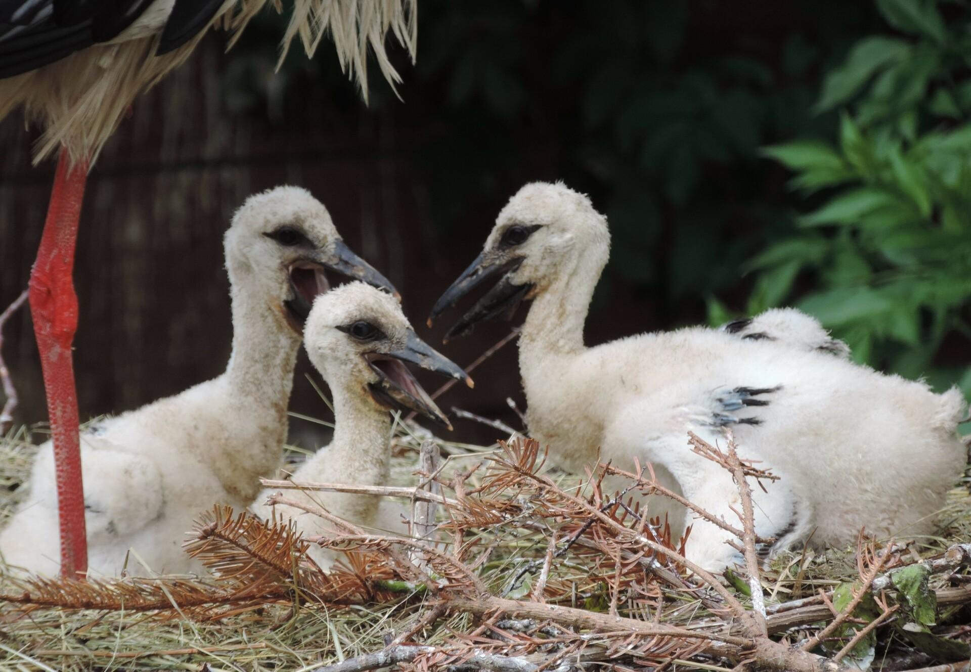 In der EGS Haringsee gibt es Storchen-Nachwuchs. (c) VIER PFOTEN