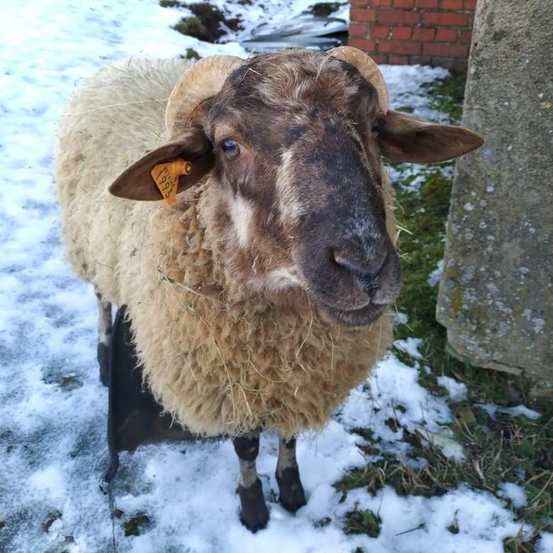 Hannibal im Schnee, 2019