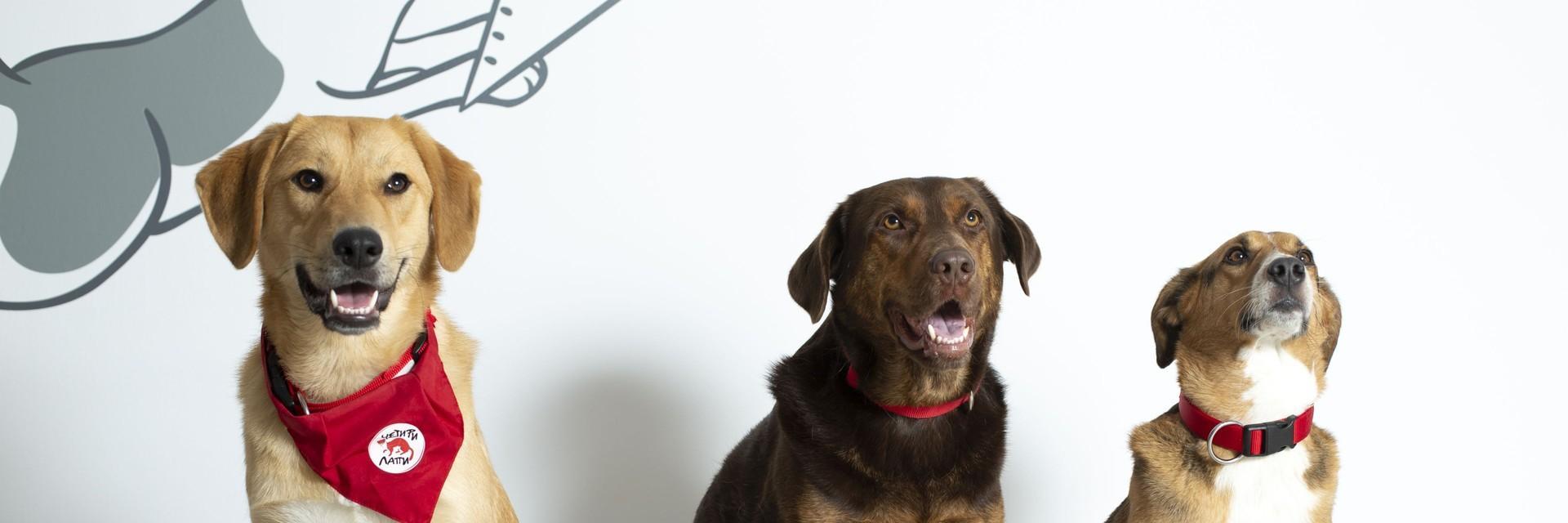 Therapy dogs FOUR PAWS Bulgaria