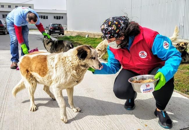 VIER PFOTEN füttern Streuner Rumänien