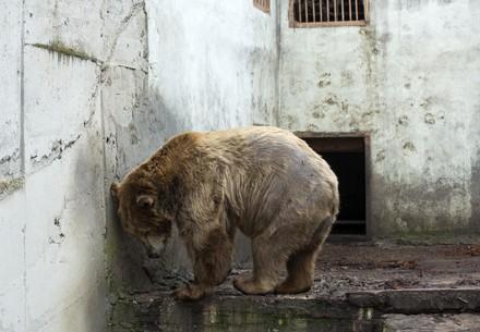 мечка в клетка