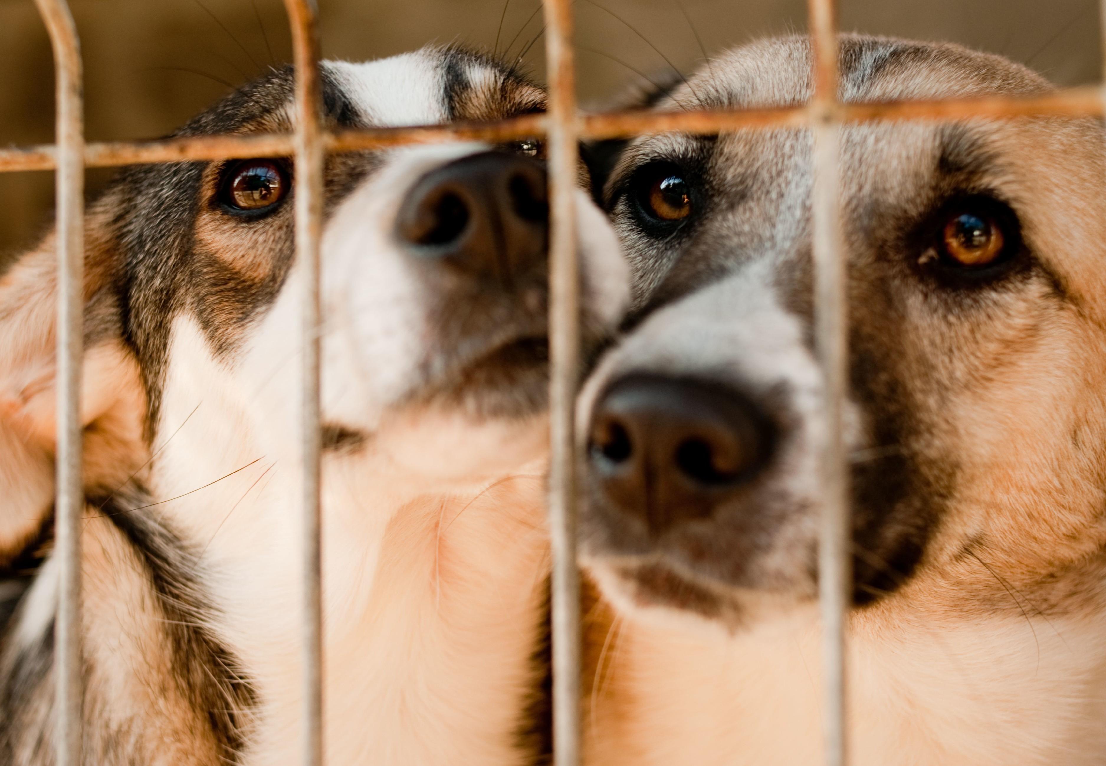 Dogs in Speranta Shelter