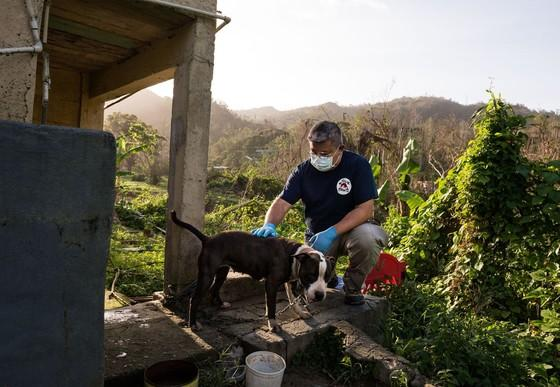 Vet Jackson with a dog after hurricane Maria