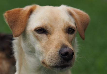 De quoi mon chien a-t-il besoin pour se sentir bien ?
