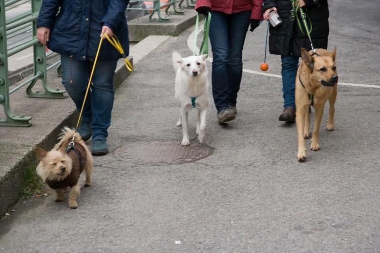 Hunde beim Spazierengehen