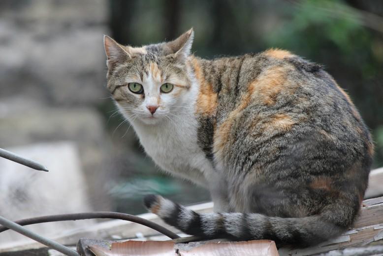 stray cat in Sofia