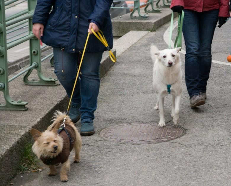 Hundemäntel schützen vor Kälte. (c) VIER PFOTEN