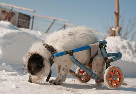 Chien handicapé errant sauvé au refuge de Speranta en Roumanie (partenaire de QUATRE PATTES)