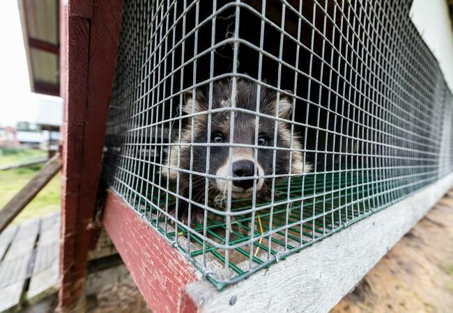 Tier im Käfig