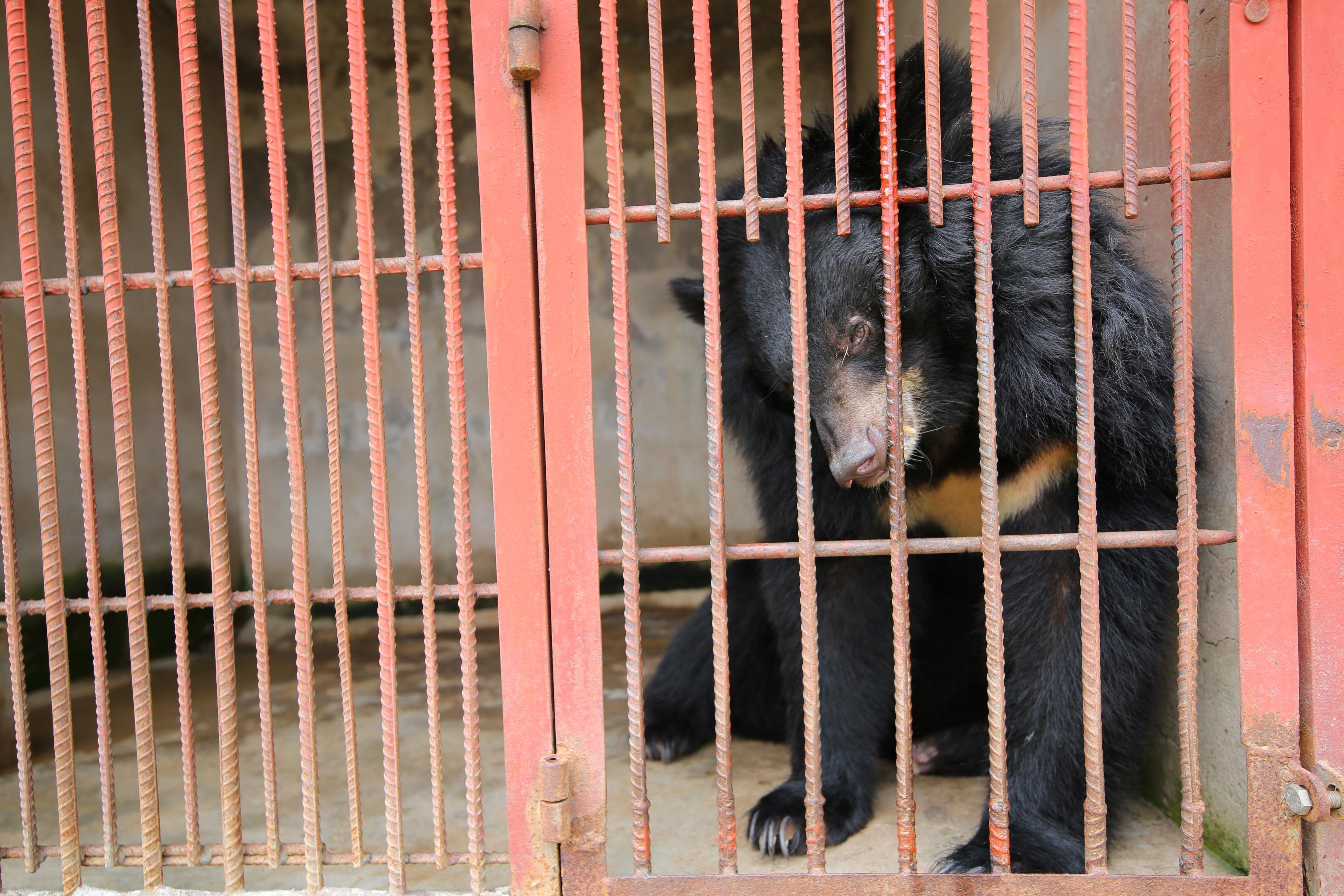 The suffering of a bile bears need to stop!
