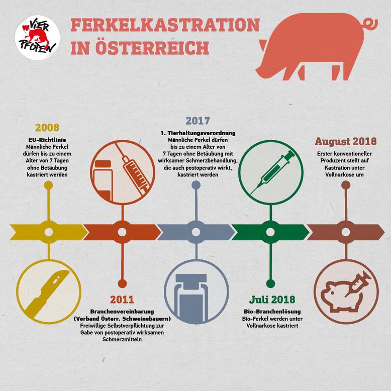 Ferkelkastration in Österreich (c) VIER PFOTEN