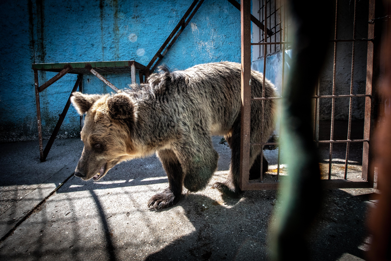 Dreibeiniger Bär im Fier Zoo (c) David Wilson