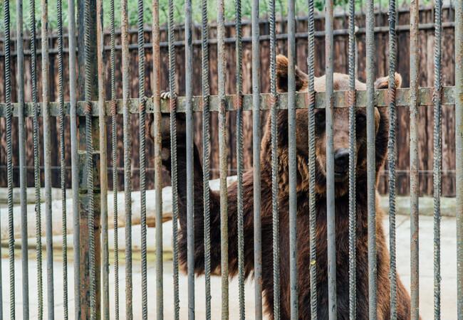 Leo hinter Gittern