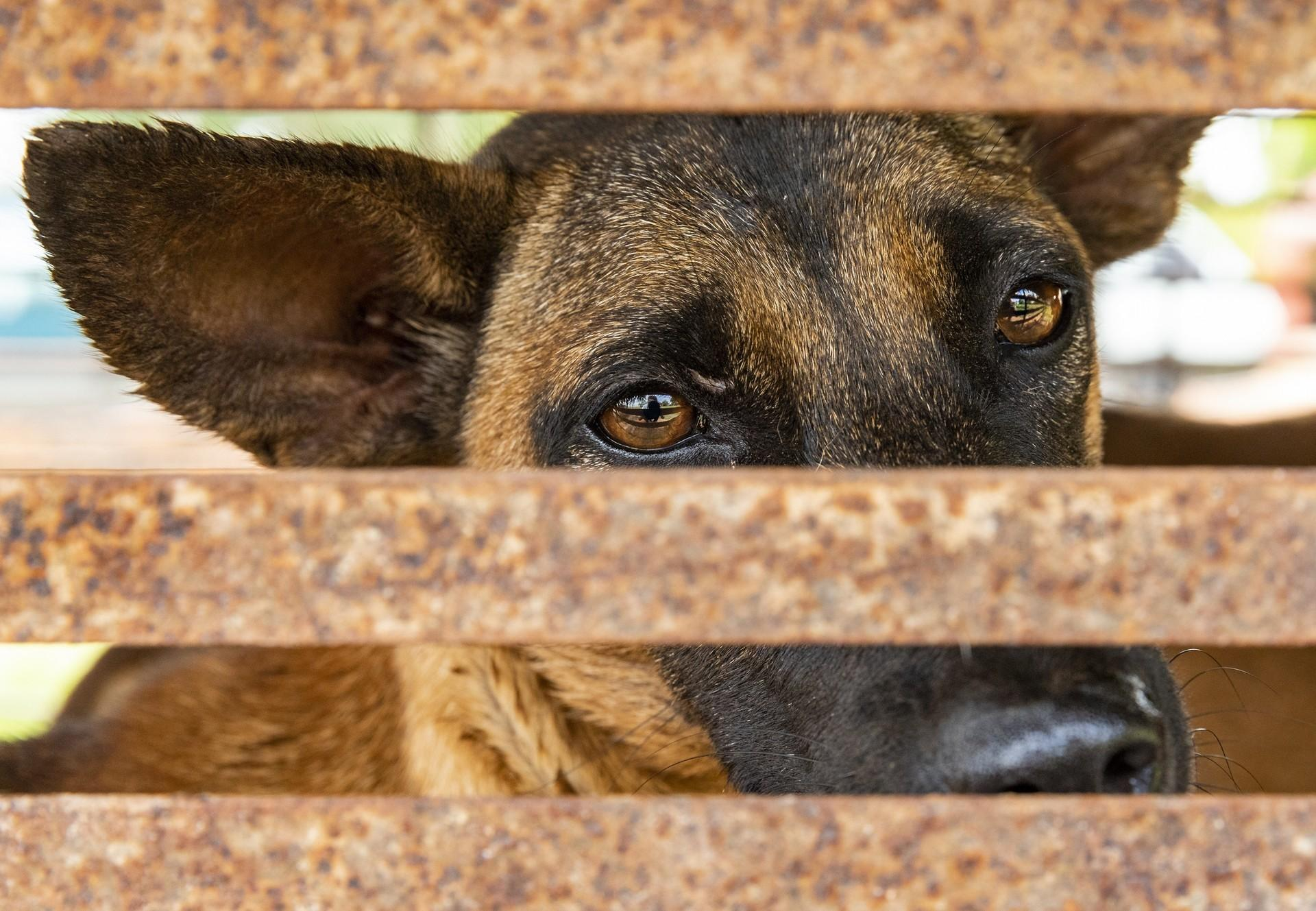 Hund hinter Gittern eines kleinen Käfigs