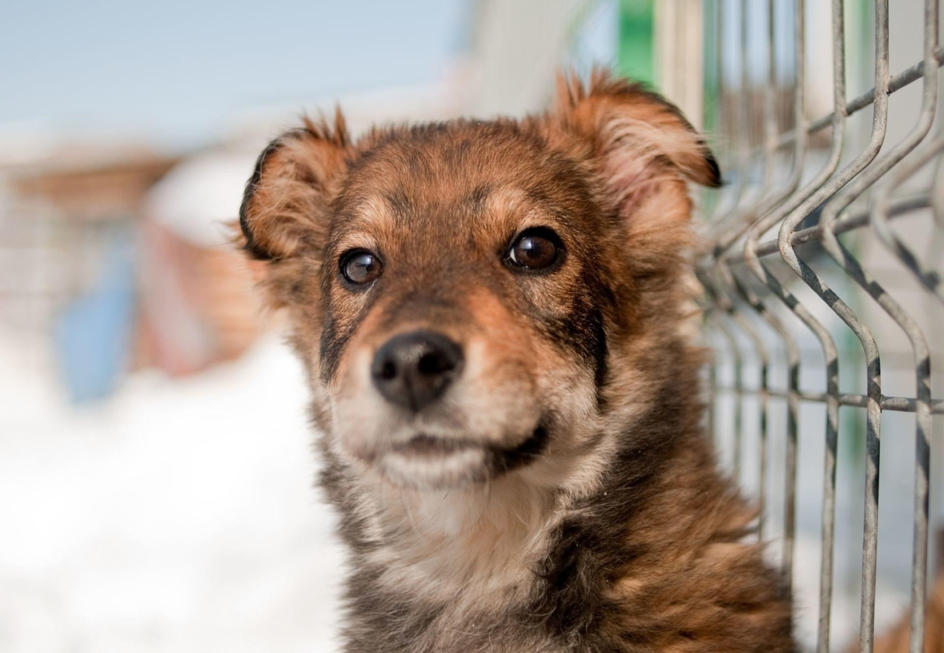 Hunde fürchten sich zu Silvester oft