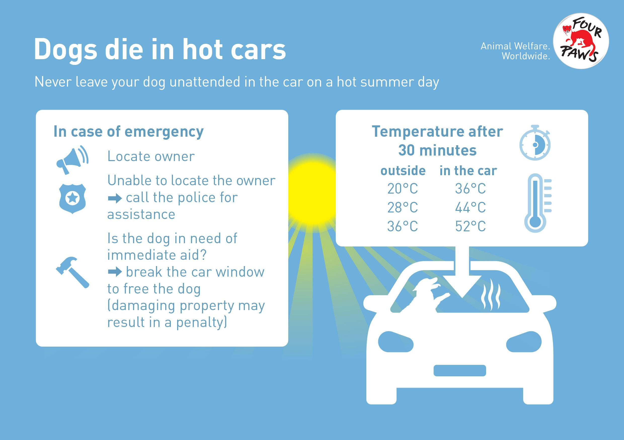 Hot cars are a death trap for dogs