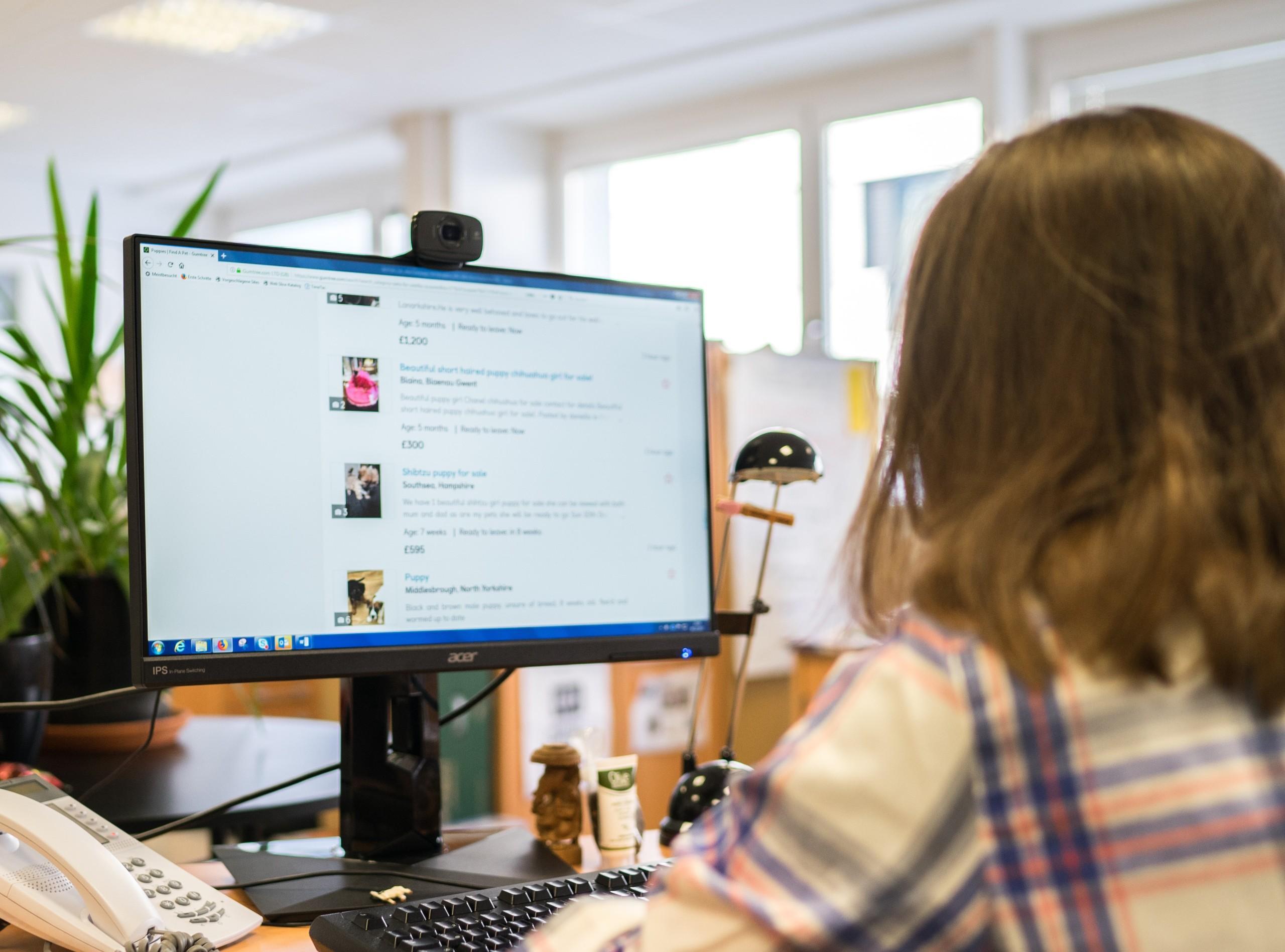 Symbolbild - illegale Welpenhadel-Kleinanzeigen auf einer Online-Plattform. Person sitzt vor dem Bildschirm und recherchiert