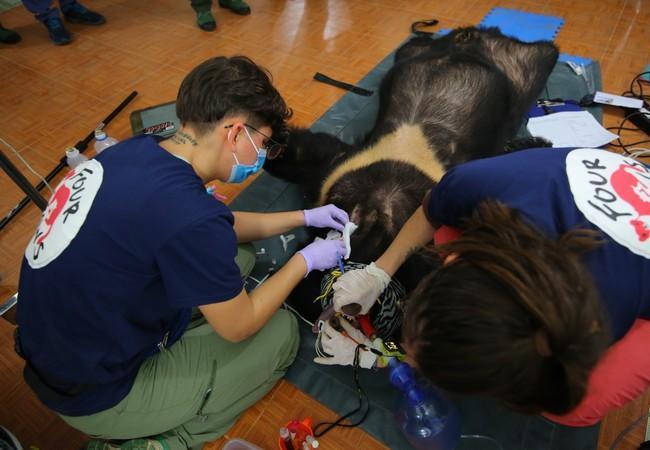 L'ours Xuan est soigné