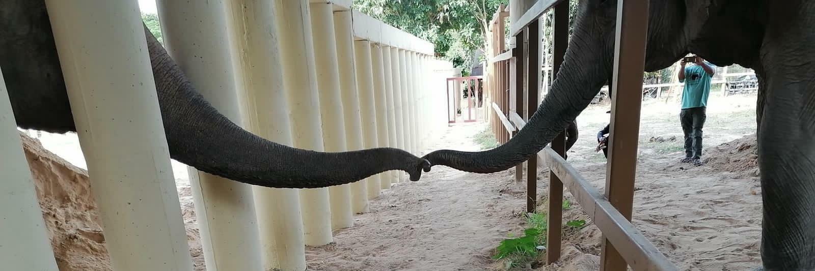 Olifant Kaavan