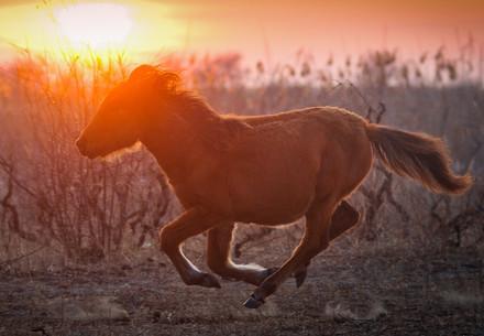 Wild mares in Letea, Danube Delta