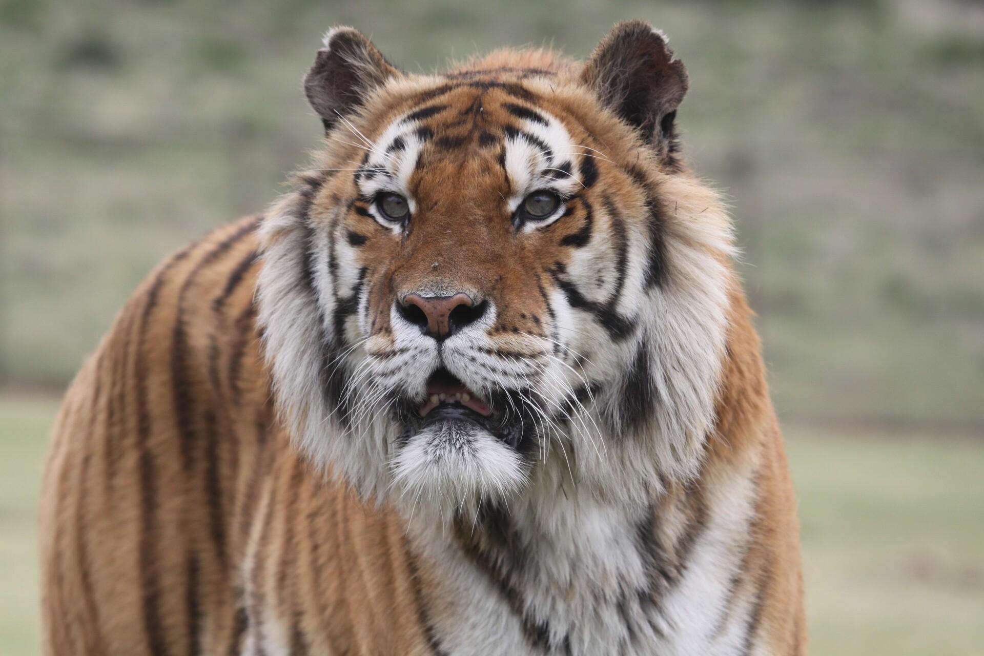 Tiger Caruso at LIONSROCK