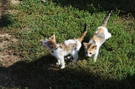 Katzenjunge