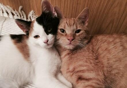 Две котки