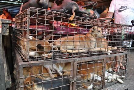 Hunde in einem Käfig auf einem Markt