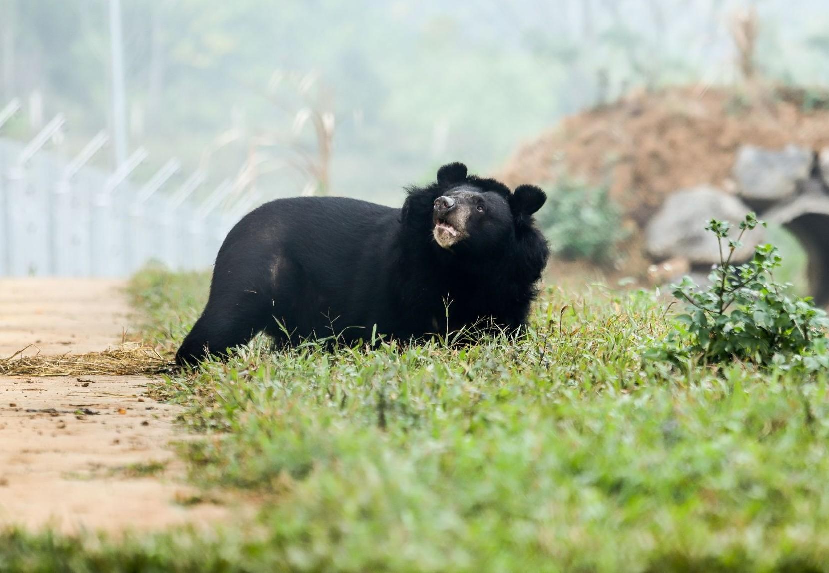 Bear Nhi Nho (Hai Chan)