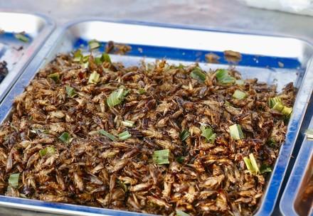 Les insectes comestibles