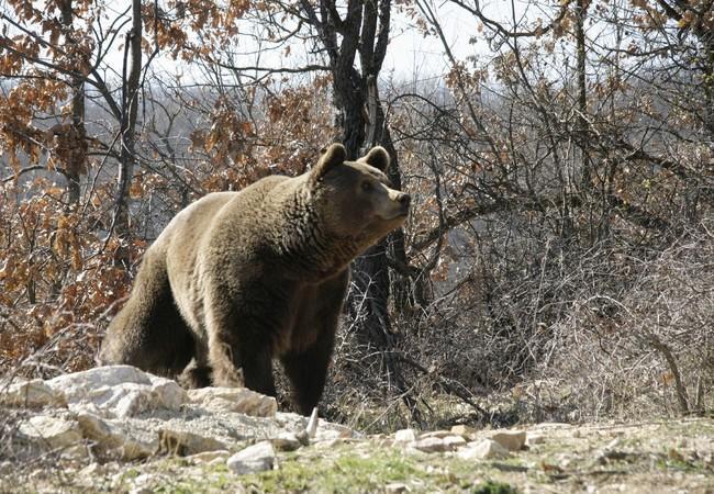 Bear Ari in his enclosure