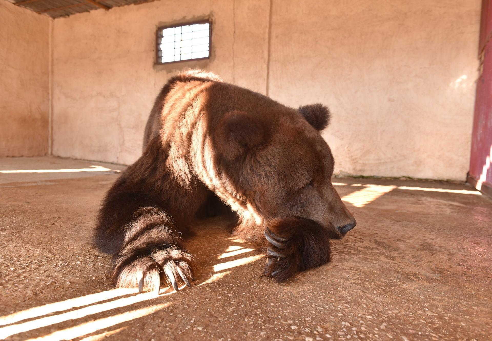 Bear in a poorly-kept zoo