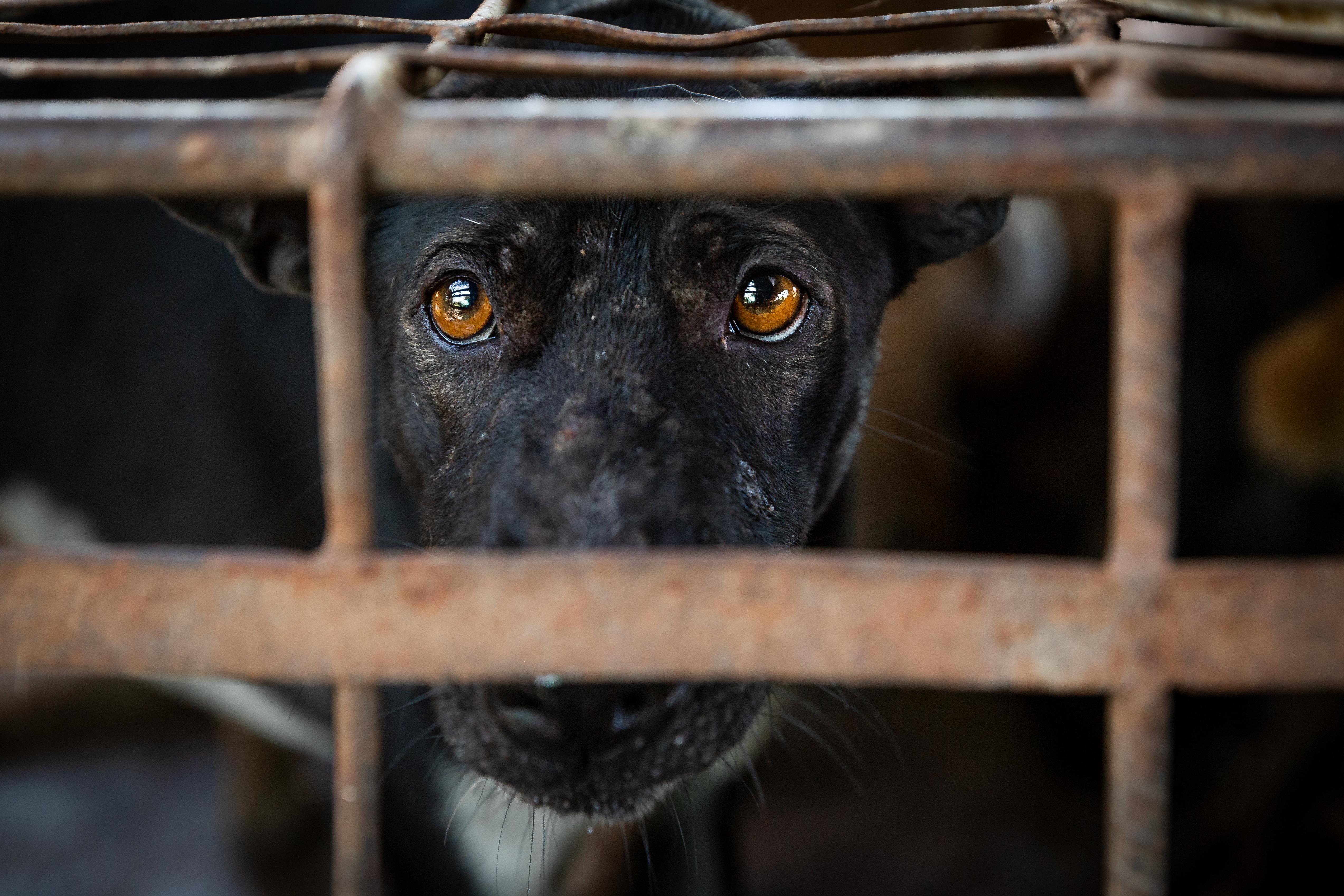 Petition gegen Hundefleischhandel
