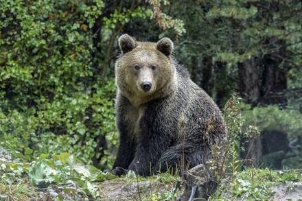 L'ours Riku au sein d'un refuge