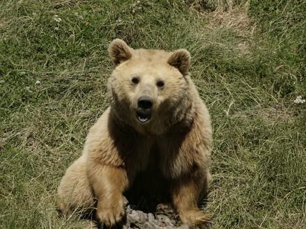 Bear Lena