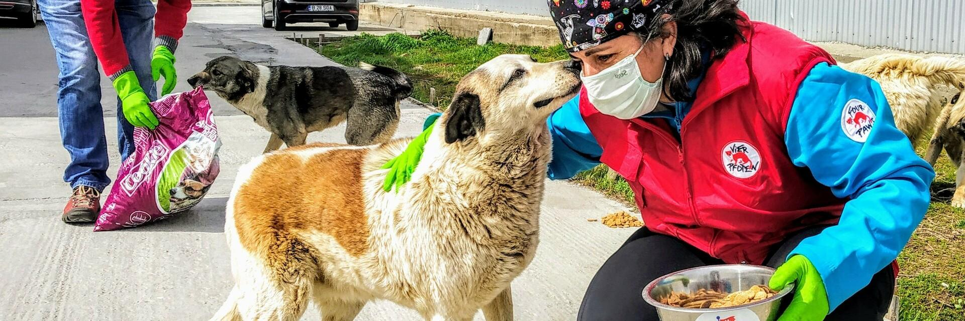 Help for strays