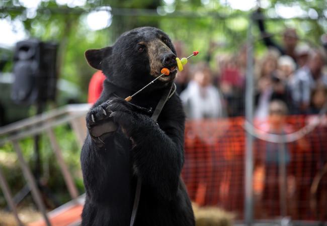Bärenshow in Frankreich