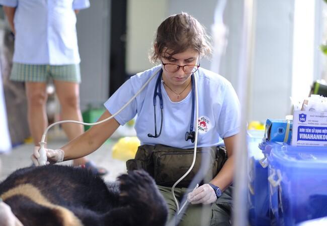 Die Tierärztin kümmert sich um die geretteten Bären