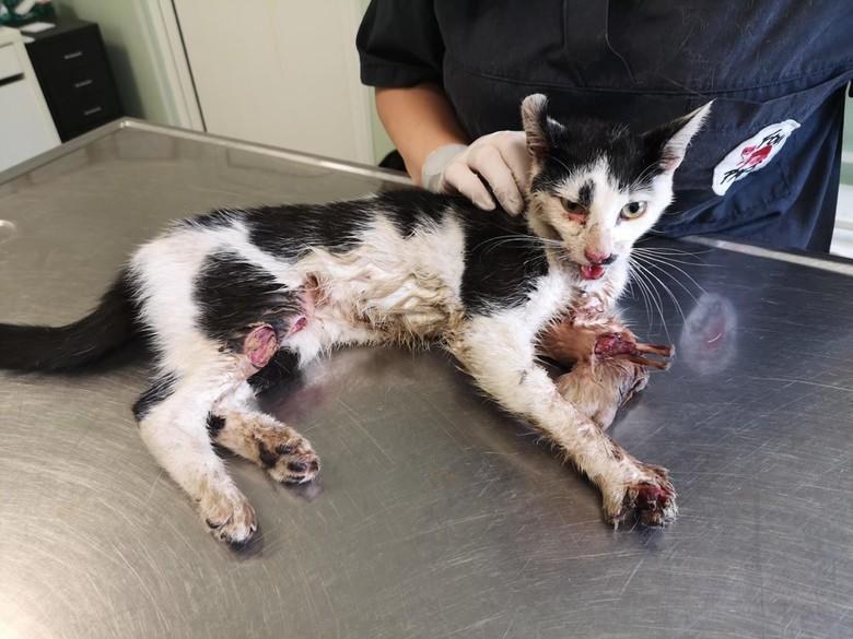 cat-vet-clinic