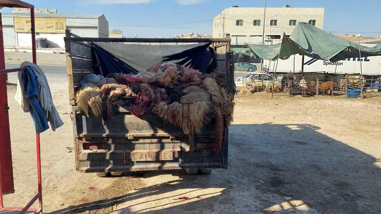 Tote Schafe auf Transporter