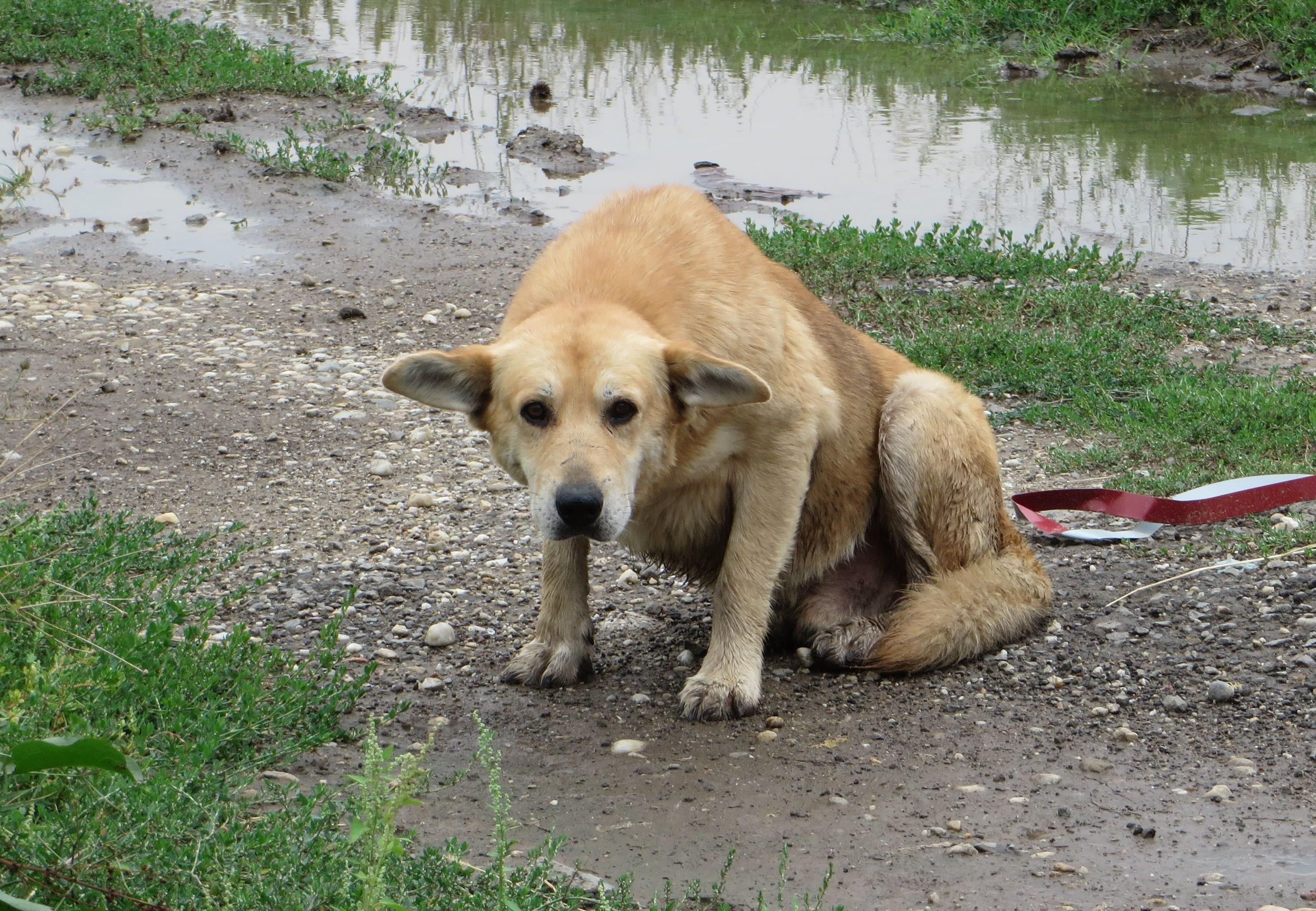 Zielige hond