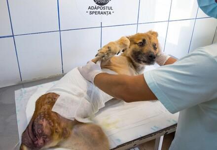 Hund Ursus wird behandelt