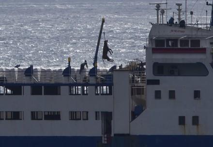 Les transports par bateau causent d'immenses souffrances aux animaux