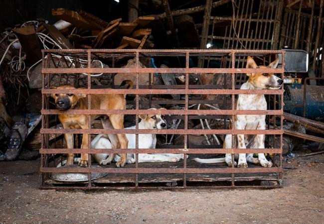 Eingesperrte Hunde