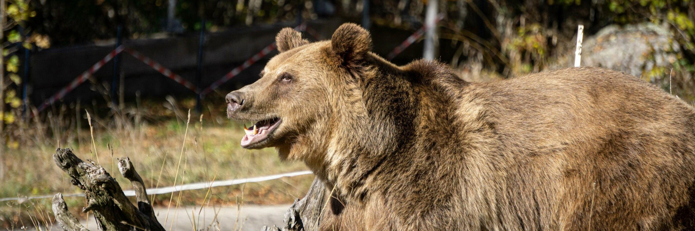 Happy bear Teddy from North Macedonia